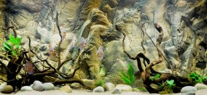 aquarium background paper d aquarium background
