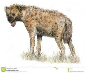 artistic business cards spotted hyena