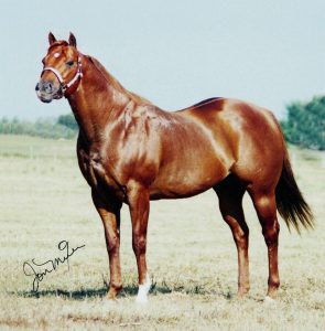 bill of sale horse s hotcolours jonmixer