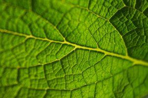 biology cover letter green leaf closeup unsplash