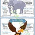 doctors notes for school teachingresource animalfactfile