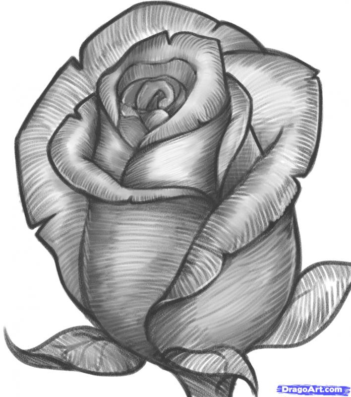drawing of rose