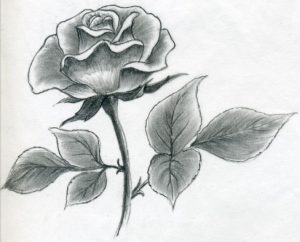 drawing of rose how to draw a rose