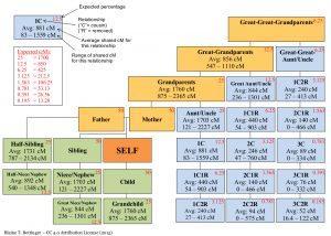 family tree diagram maker shared cm relationship tree