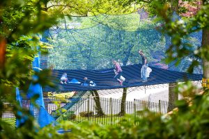family tree with pictures treetop nets family adventure ripon