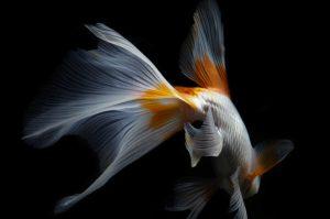 famous still life photographers © hiroshi iwasaki