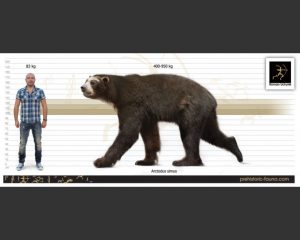 height vs weight chart arctodus size x