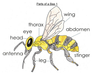 letters of introduction for teachers parts of bee