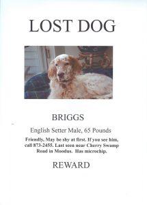 lost dog template lostdog