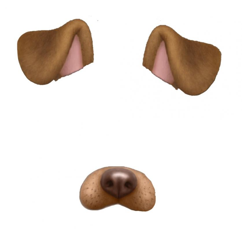lost dog template