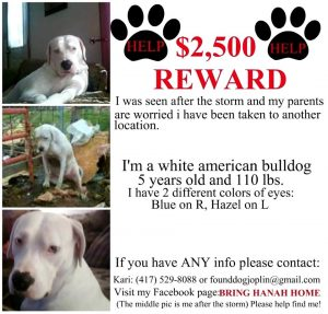 lost pet template missing dogs