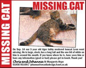 lost pet template missingcatadvert