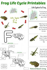 montessori lesson plans frog life cycle pin x