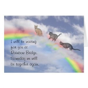 print out sympathy card cats waiting at rainbow bridge greeting card rdccacdbeec xvuak byvr