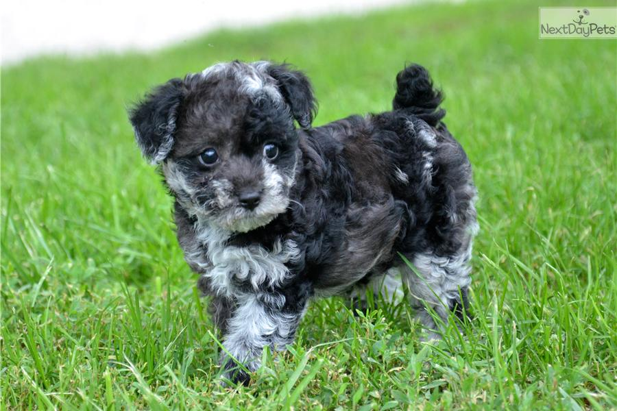 puppy bill of sale
