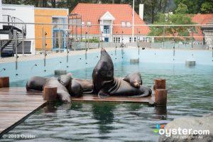 spa business planning norway bergen aquarium bergen v