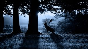 the best backgrounds awesome deer wallpaper