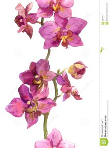 tropical flowers drawing floral strip border exotic flowers orchids seamless background orchid hand painted watercolor drawing