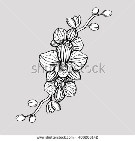 tropical flowers drawing